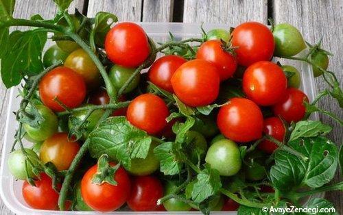پرورش گوجه گیلاسی در خانه