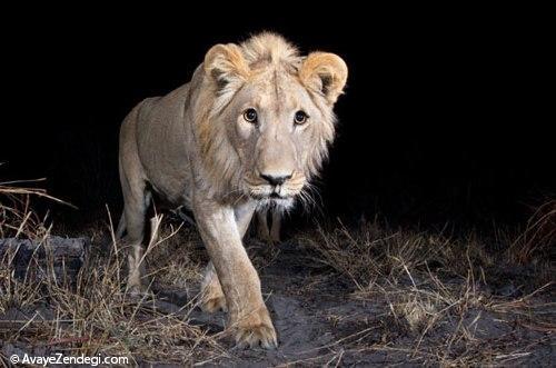 شکار منزویترین جانوران با دوربین