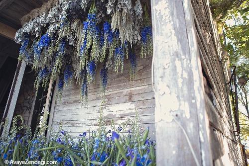 خانه ای سراسر گل