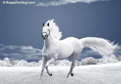 اسب سفید وحشی اثر منوچهر آتشی