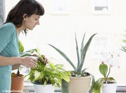 روشهای ساده برای آبیاری گیاهان پیش از سفر