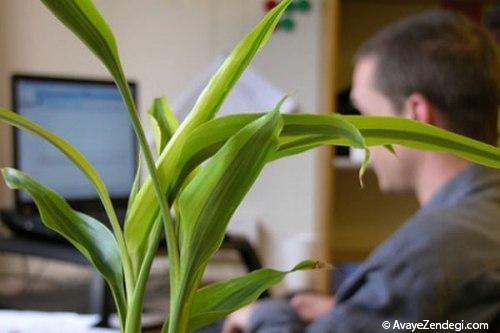 انتخاب یک گیاه مناسب دفتر کار