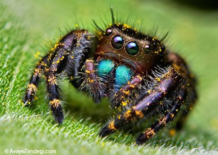 شناخت عنکبوت های عجیب و شگفت انگیز