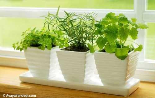 آشنایی با گیاهان ضد پشه آپارتمانی