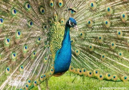چرا موجودات زنده به زیبایی گرایش دارند؟