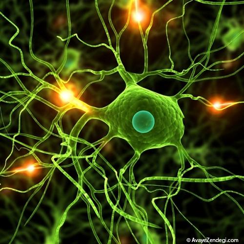 6 قاتل سلول های عصبی