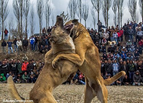 مقایسه جرم حیوان آزاری در ایران با سایر کشورها