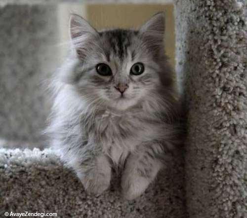 10 واقعیت در مورد گربه ها که ما آن را نمی دانیم!