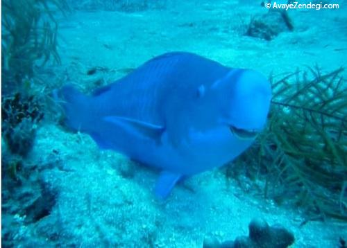 ماهی صید شده توسط خانمی که به انیمیشن Finding Dory شباهت زیادی دارد!